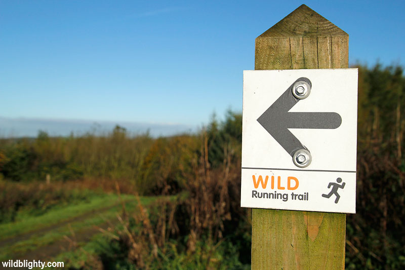 The Delamere Forest Wild Running Trail
