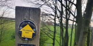 Delamere Way Yellow Way-mark